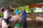 """Giá lợn hơi tăng """"chóng mặt"""" 10.000 đồng/kg trong một tuần, Hà Nội lệnh cấm """"găm hàng"""""""