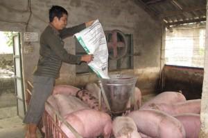 """Giá thịt heo cao chót vót: Găm hàng, đẩy giá, Bộ NN&PTNT """"đá bóng"""" trách nhiệm?"""