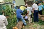 Cận cảnh cây phượng bật gốc trong sân trường, 1 học sinh tử vong, nhiều học sinh bị thương