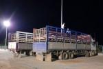 Gần 2 triệu con lợn Thái Lan sắp về Việt Nam