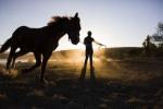 Ngựa như thế cần gì phải trông