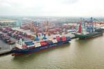 Cảng biển Việt Nam mở hàng bằng hàng loạt tàu lớn cập bến