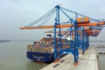 Cước phí hàng xuất khẩu: 'Vùng tối' của các hãng tàu biển nước ngoài?