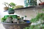 Bonsai tiền triệu bay lơ lửng hút khách Sài Gòn