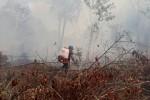 Kiểm lâm vác từng can nước lên rừng chữa cháy