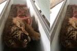 Phát hiện 5 cá thể hổ trong tủ đông lạnh
