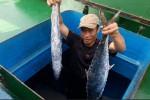 Ngư dân Hà Tĩnh trúng mẻ cá thu bán gần 400 triệu đồng