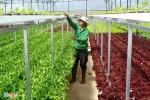 Gói 100.000 tỷ cho nông nghiệp công nghệ cao vẫn khó do các tiêu chí